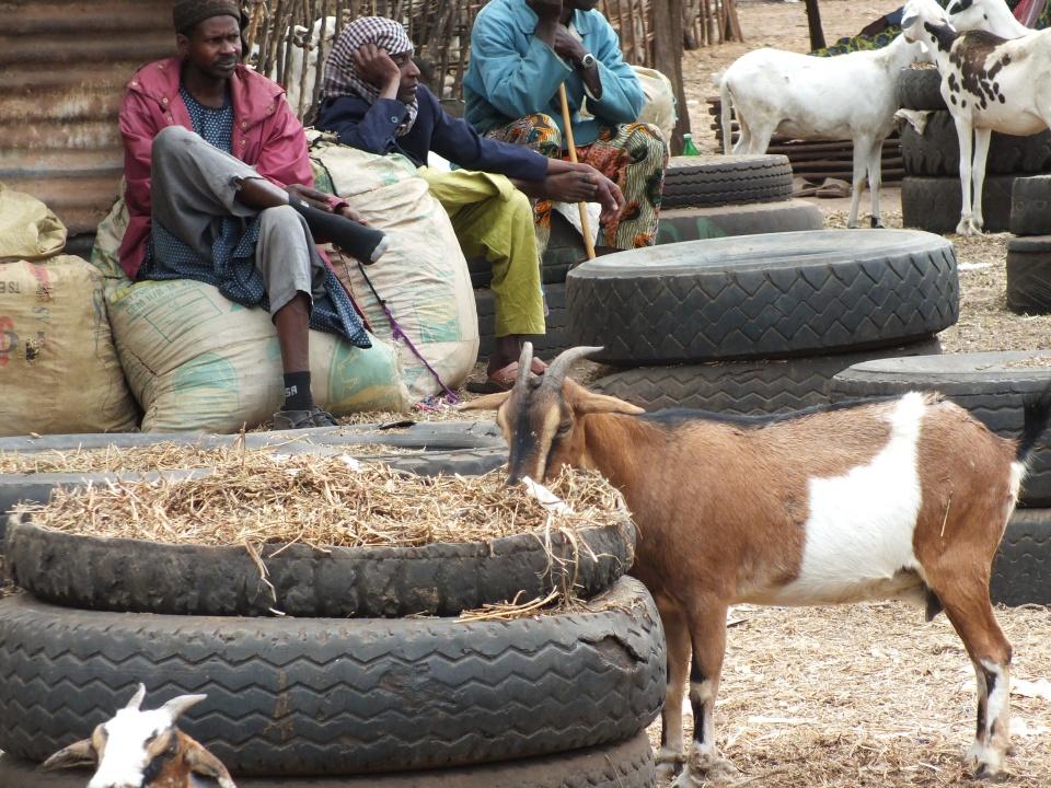 Gambia Abuko plaatselijke veemarkt