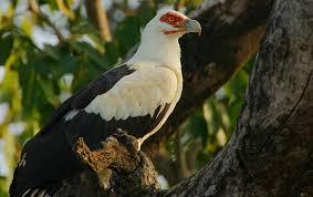Fathalapark Senegal Prachtige vogels
