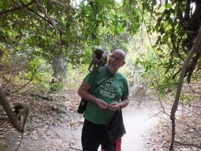 Een groen vervet aapje op je schouder
