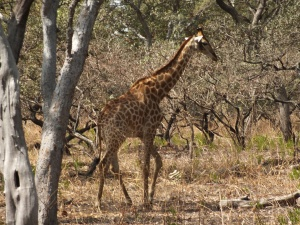 excursies in Gambia