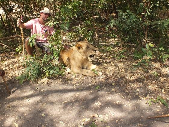 Fathalapark Senegal in contact komen met leeuwen