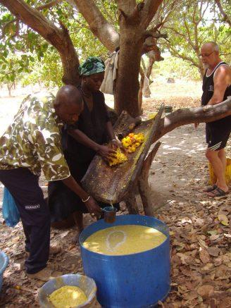 Uitpersen vruchten cashewnoten in een holle boomstam