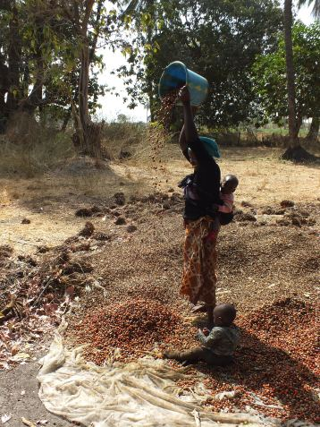 Verwerking vruchten voor de palmolie